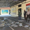 Polisi Gagalkan Penyelundupan Penyu Hijau, 7 Orang Ditangkap