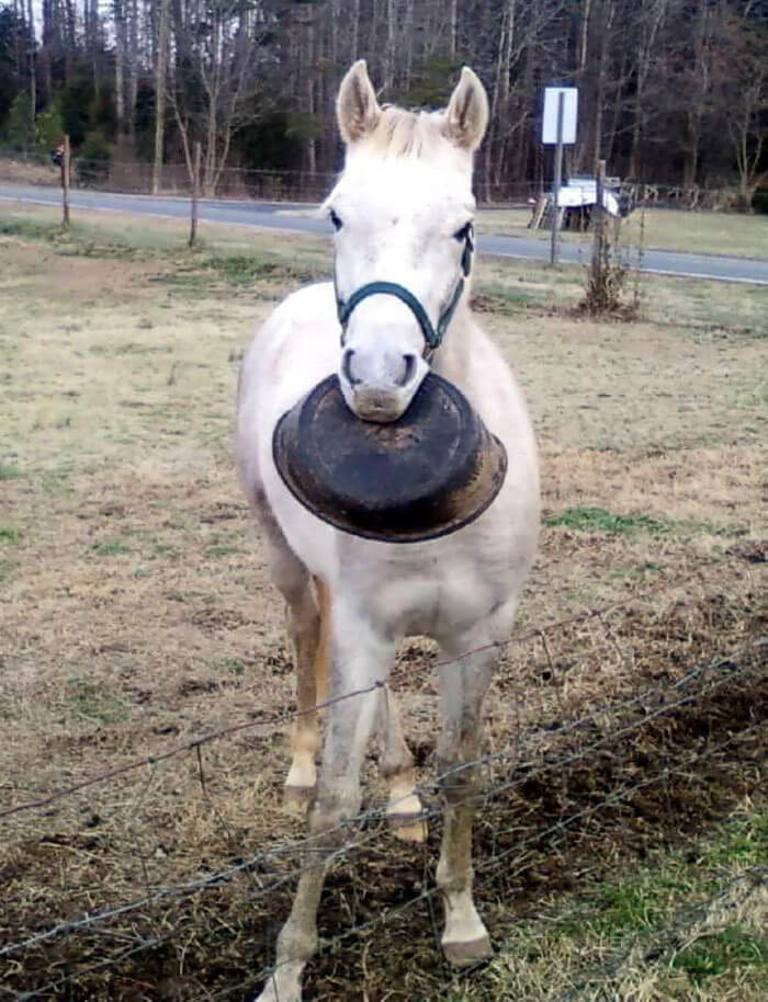 Meet Tango, The Hilariously Stupid Horse That Has Gone Viral