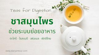ชาสมุนไพรช่วยระบบการย่อยอาหาร, tea for digestion, ชาตะไคร้ โรสแมรี เฟนเทล ผักชีไทย, diary on tour, สุขภาพและความงาม