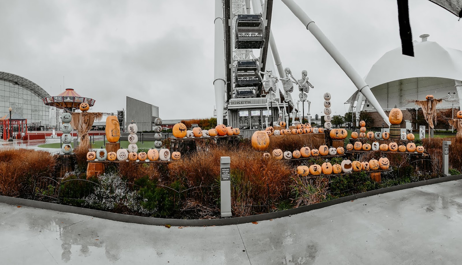 Navy Pier Pumpkin Lights