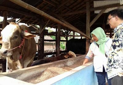 Dinas Koperasi dan UMKM Provinsi Lampung Fokus Tingkatkan Kualitas SDM Pelaku Usaha