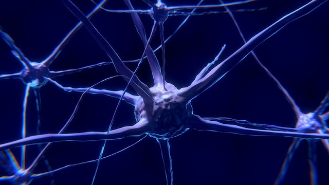 Descubren por qué la obesidad afecta a la memoria y el aprendizaje y cómo evitar este efecto nocivo
