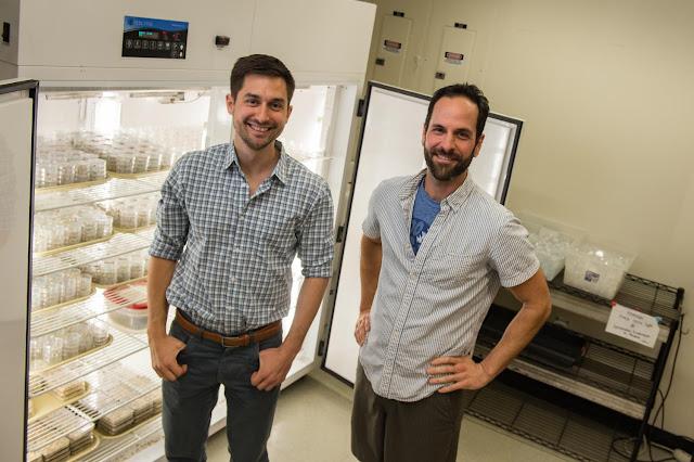 Evolution contributes to invasive beetles' speed, range of dispersion