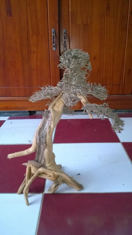lũa bonsai cho hồ thủy sinh size trung