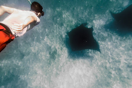 Berjumpa Ikan Pari Manta dan Taka Makassar
