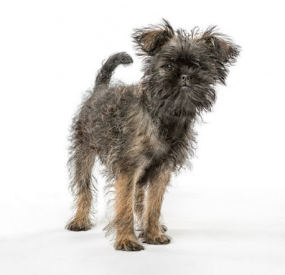 Figure: Identify this ugly looking dog breed