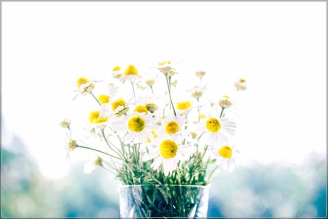 Ảnh hoa cỏ tháng chạp