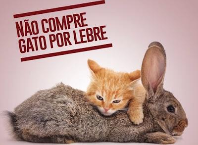 Resultado de imagem para não compre gato por lebre