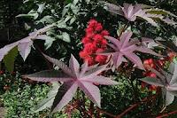 Самые ядовитые растения