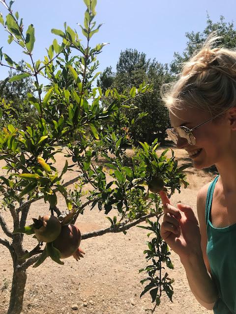 Granaatõunapuu