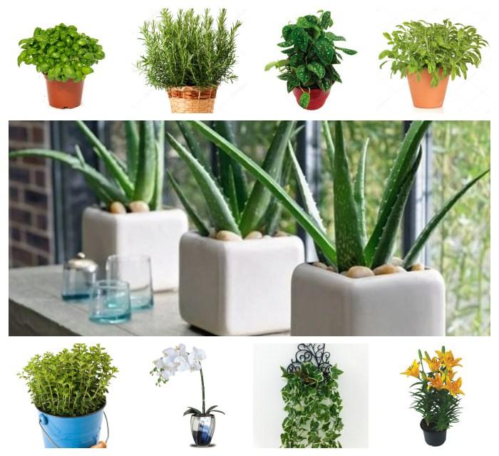 12 Plantas que Atraem Energia Positiva para sua Casa!