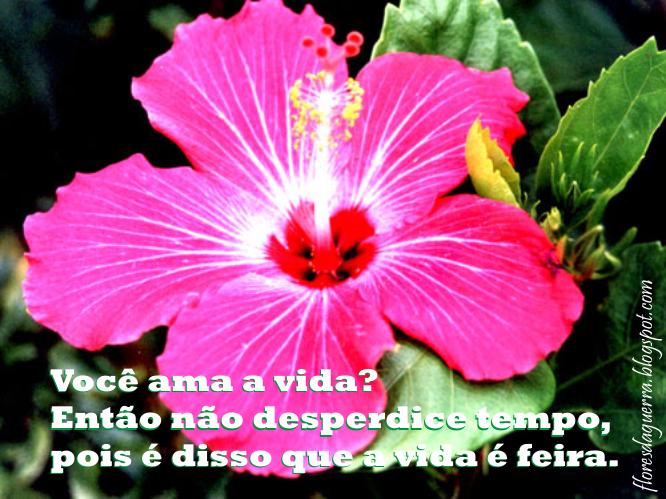 Fotos De Flores Com Frases
