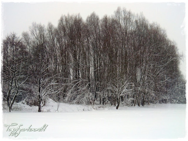 Gartenblog Topfgartenwelt Winter: verschneiter Wald