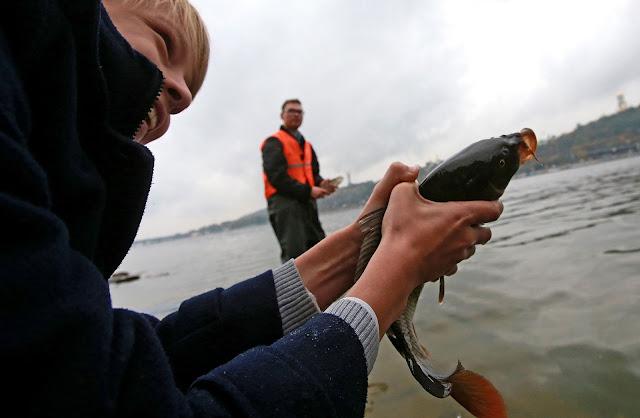 рыбу выпускают в Днепр