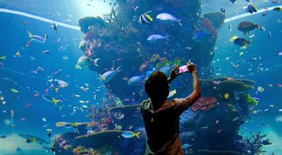 Macam-Macam Harga Tiket Sea Aquarium Singapore