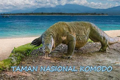 10 Alasan Mengunjungi Taman Nasional Komodo Yang Megah