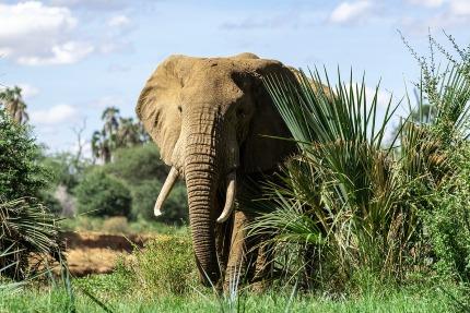 Elefántsirató könyv értékelés, kritika