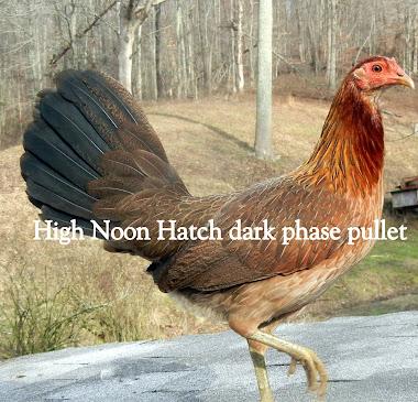 High Noon Game Farm