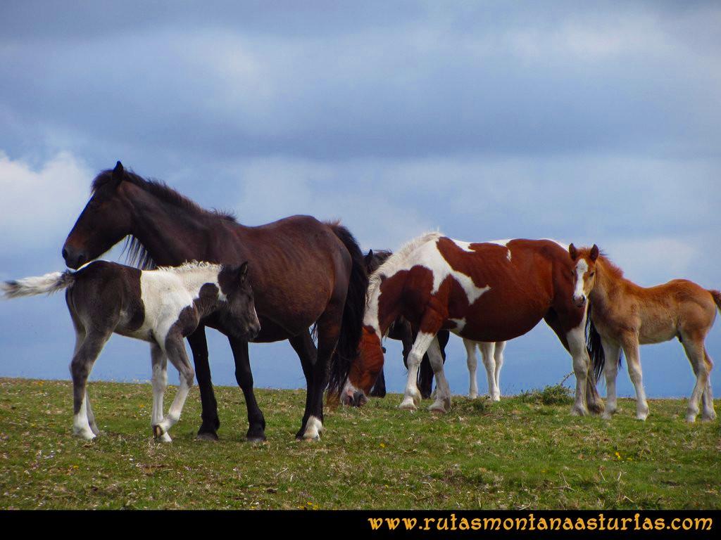 Ruta Llan de Cubel y Cueto: Caballos y potros