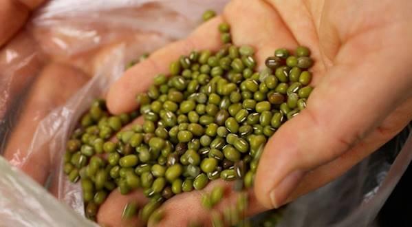 Manfaat kacang hijau untuk kesehatan
