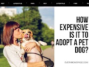 How Expensive Is It To Adopt A Pet Dog?