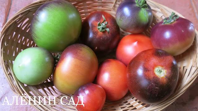 Красный уголь, томаты, помидоры, сорта томатов, синие томаты, аленин сад