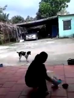 Người phụ nữ chặt chân chó tự tay băng bó và chăm sóc vết thương cho con chó