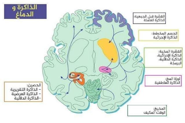 طرق علاج التذكر وتنشيط الذاكرة العاملة