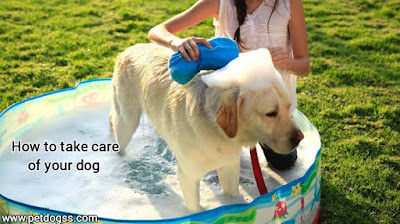 How to take care of your dog?