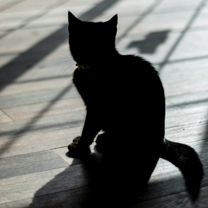 photo of a cat in silhouette
