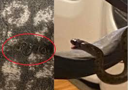 Georgia woman finds 18 snakes living under her bed