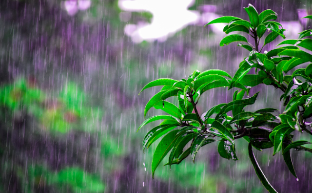 rain coming down onto a plant