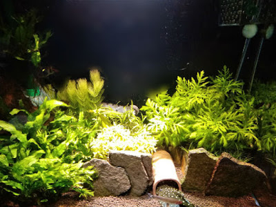 IKEA植物育成用LED電球(4000K)の色味