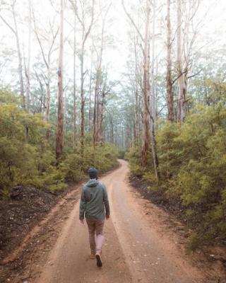 boranup forest, karri forest, western australia, margaret river