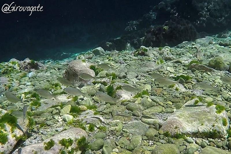 snorkeling apella karpathos