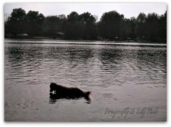 Lake home, Lake, Cricket, Golden Retriever, Fishing, Tag, Bubbles, Happy Place