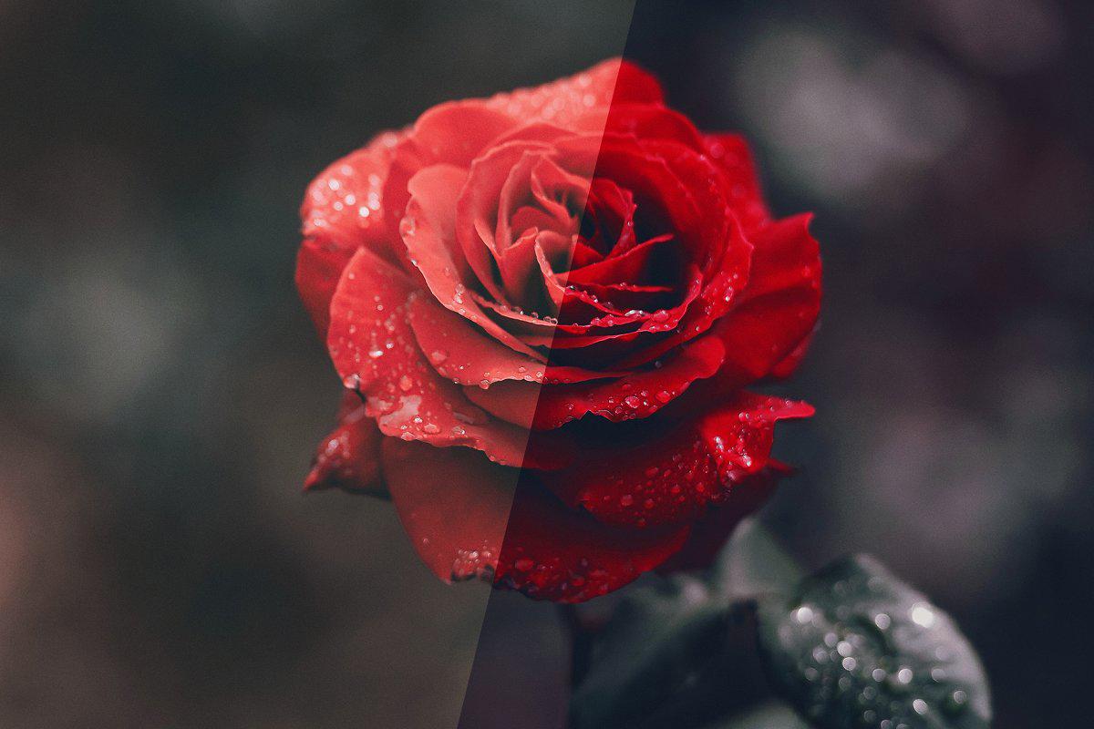 Rose Photoshop Action 4974092 .