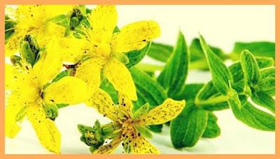 ceaiul de sunatoare pareri forumuri beneficii si contraindicatii