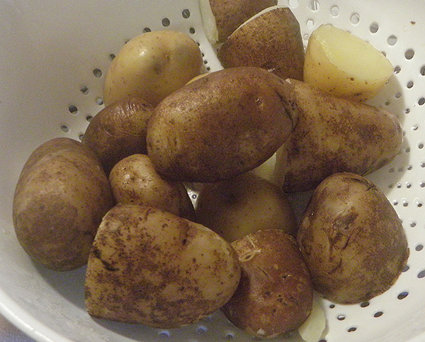 Boiled potatoes in colander