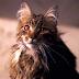 3 könyves macska, akikre biztosan emlékszel