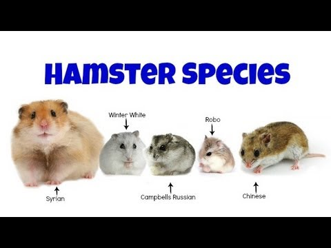 Reflection Of Life: The hamsters