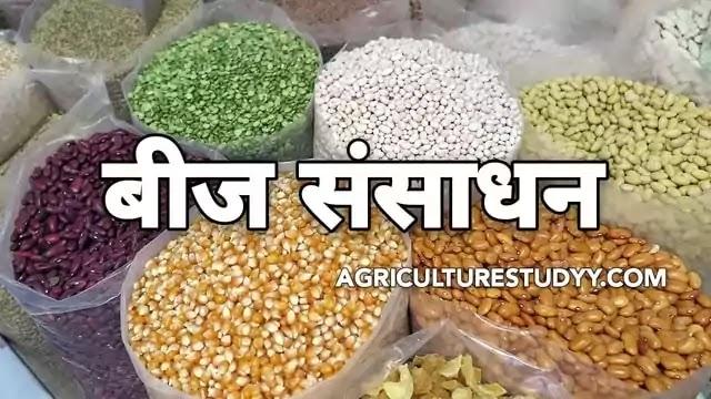 बीज संसाधन क्या है इसके सिद्धांत एवं बीजों का भण्डारण कैसे किया जाता है इसकी विधियां कोन कोन सी है, defination of seed processing in hindi, बीज संसाधन