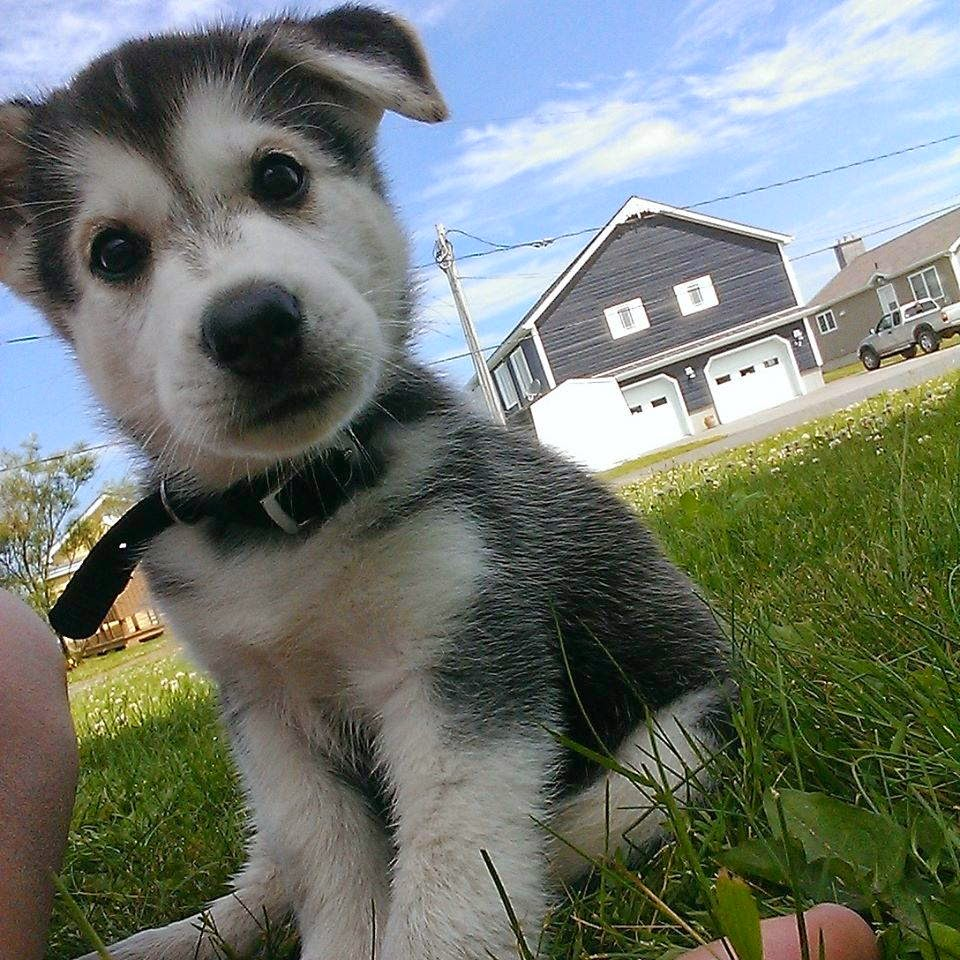 50 Incredibly Cute Baby Animal Pictures around the World  |Cute Baby Dog Pictures