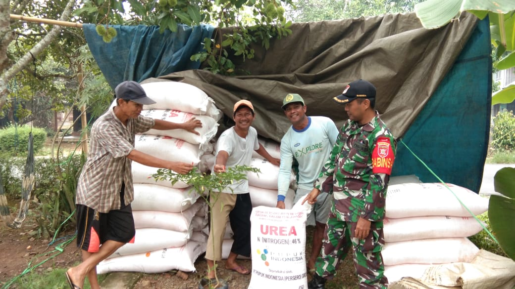 Babinsa Guha Bantu Distribusikan Pupuk Subsidi