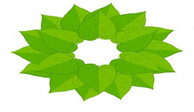 15 Manfaat daun sirih merah pada tubuh