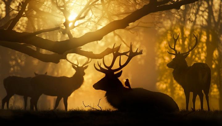 geyik resimleri