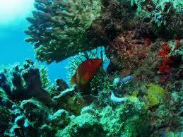 ikan diving lombok