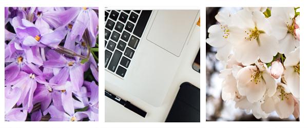 darmowe zdjęcia kwiatów