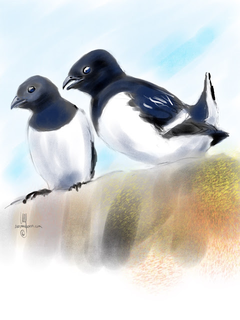 Little Auk bird painting by Artmagenta