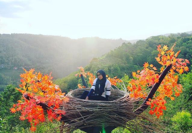 Wisata Bukit Mojo Gumelem, Spot Foto Arsitetik di Jogja